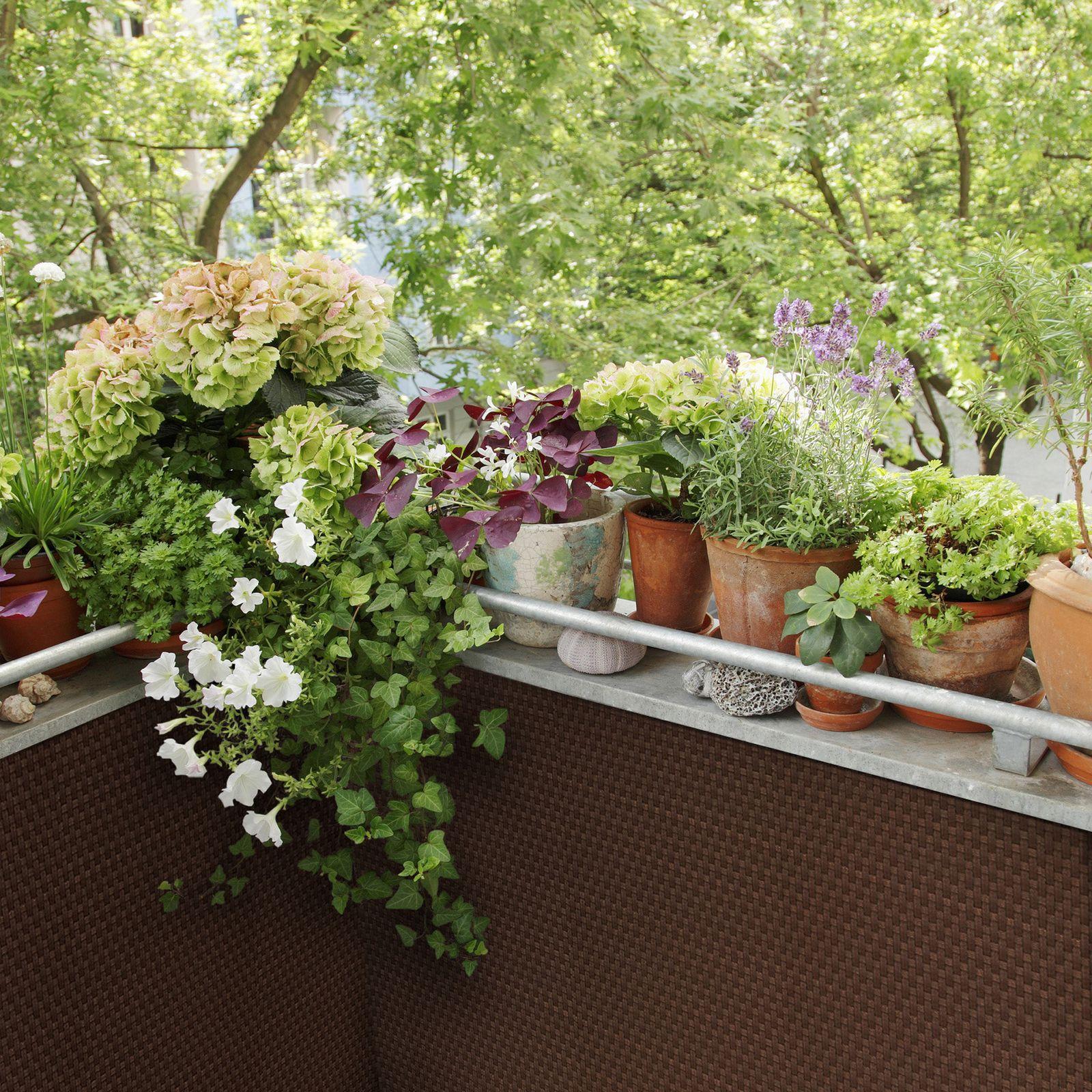 Osłona balkonowa Tress 0,9 x 5 m brązowa PATIO